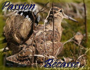Passion Bécasse