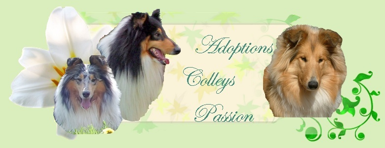 Adoptions Colleys Passion