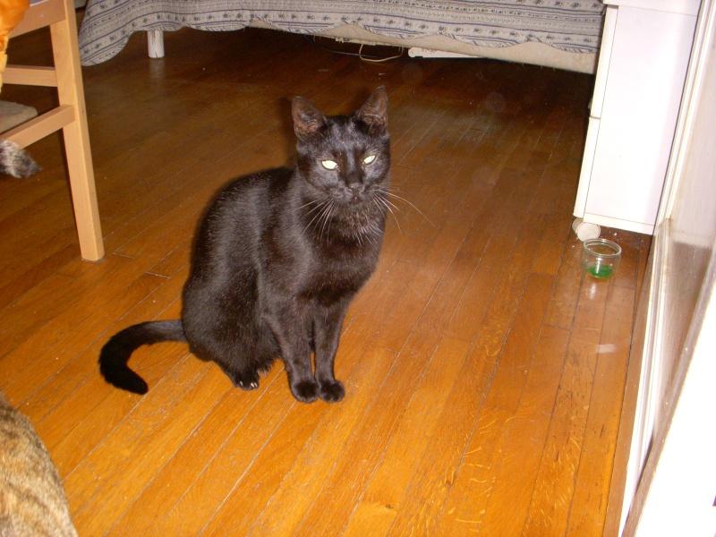 Association chats sans toit nancy en alerte for Salon chiot nancy