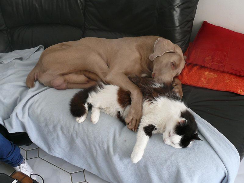 Photo de vos chiens qui dorment?