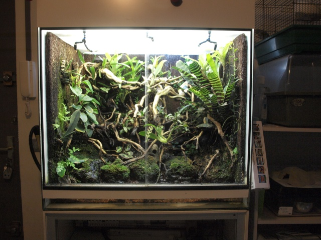 terrarium de plantes tropicales