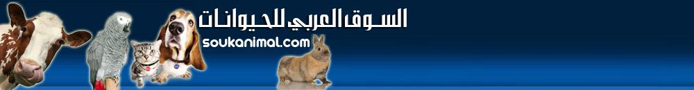 السوق العربي للحيوانات