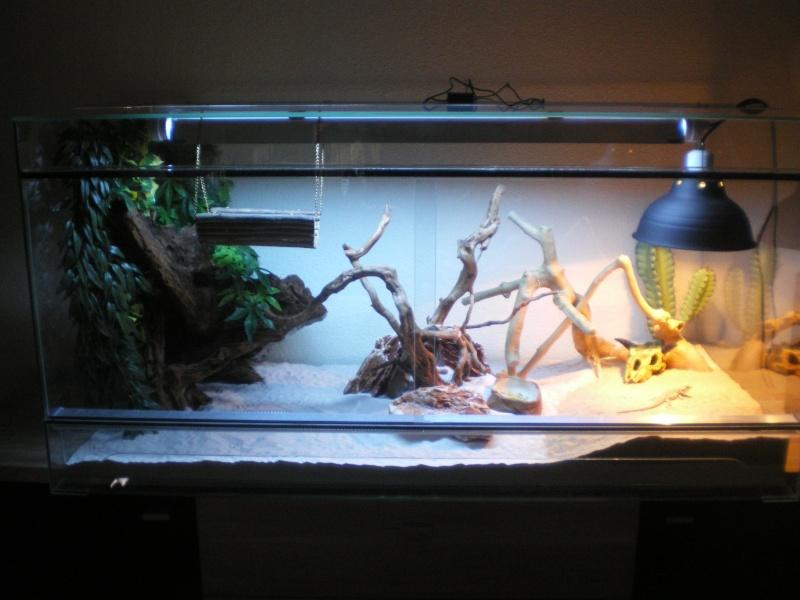 terrarium en verre 120x60x60. Black Bedroom Furniture Sets. Home Design Ideas