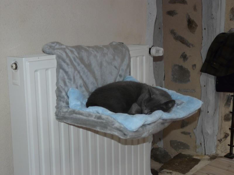 hamac chauffant tout petit prix. Black Bedroom Furniture Sets. Home Design Ideas