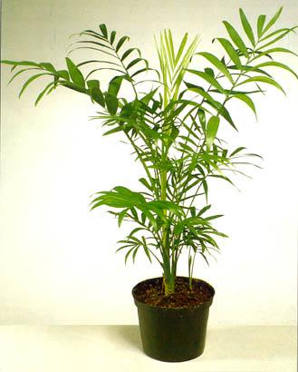 Les plantes toxiques pour nos matous page 2 - Plantes non toxiques pour les chats ...