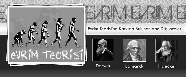 Evrim Teorisi - The Evolution Theory