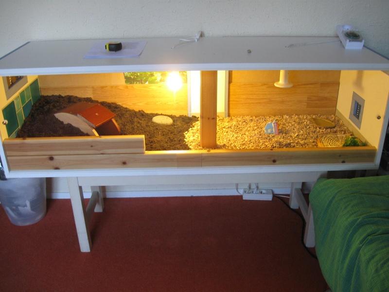 terrarium fait maison ventana blog. Black Bedroom Furniture Sets. Home Design Ideas