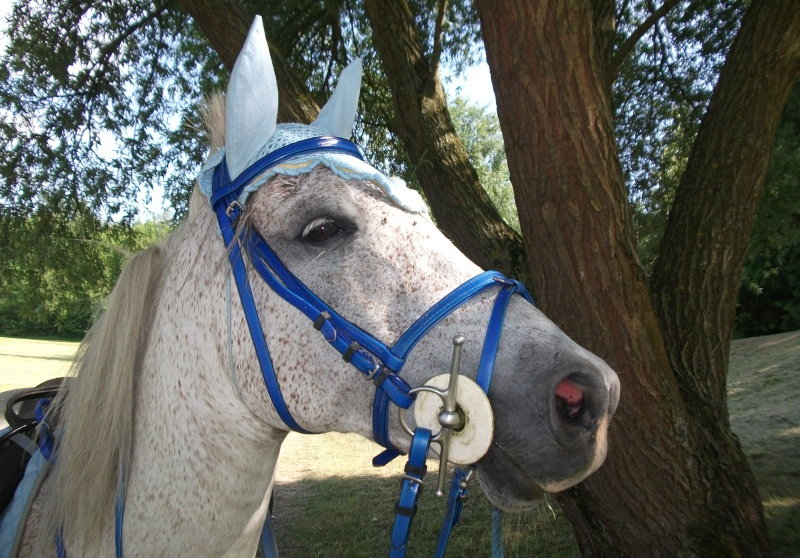 couverture double poney
