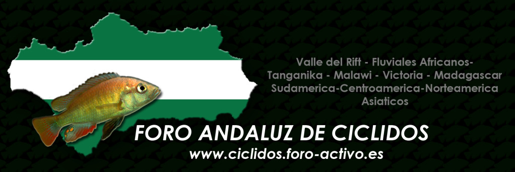Cíclidos en Andalucía
