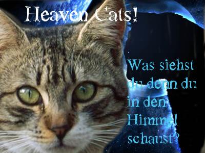 Heaven-Cats