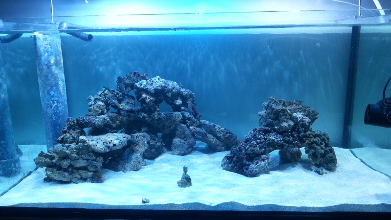 Aquascaping Show Your Skills Page 32 Reef Central Online Community