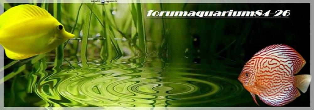 forumaquarium84-26