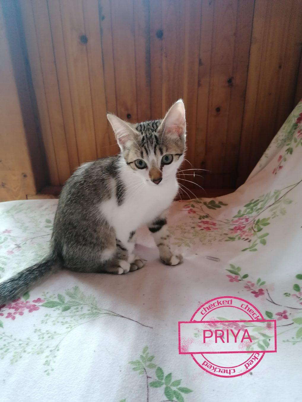 priya10.jpg